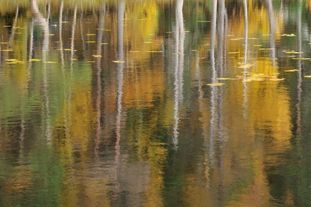 White Fox Gallery, Coldstream: 2 in 1 Spring Exhibition