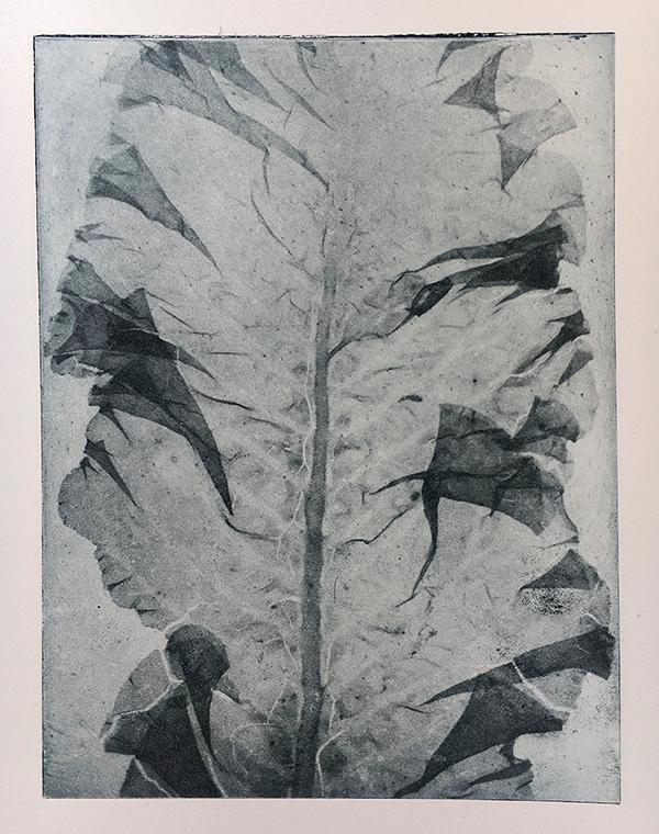 Jane Raven - Toyobo Seaweed Print