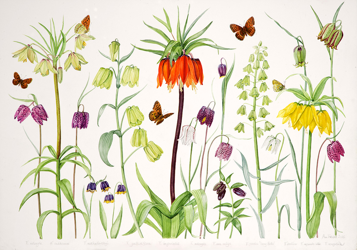 Ann Fraser, Just Fritillaries