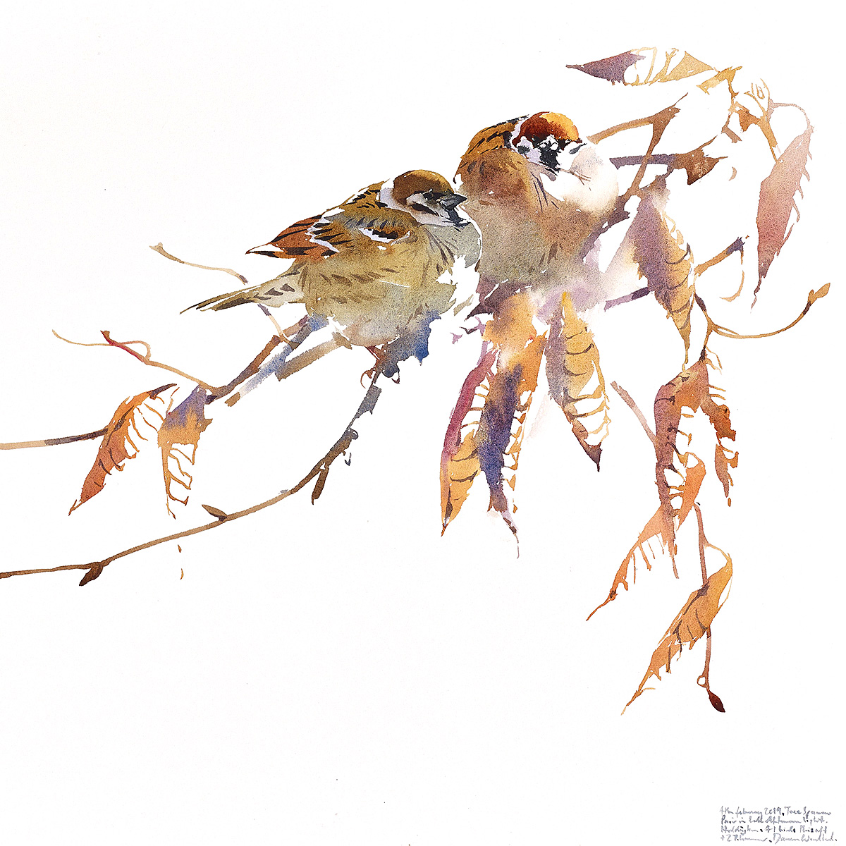 Darren Woodhead - Tree Sparrow Pair