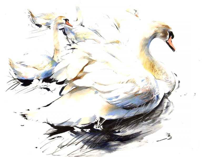 Lucy Newton, 'Swans', watercolour, ink, pencil