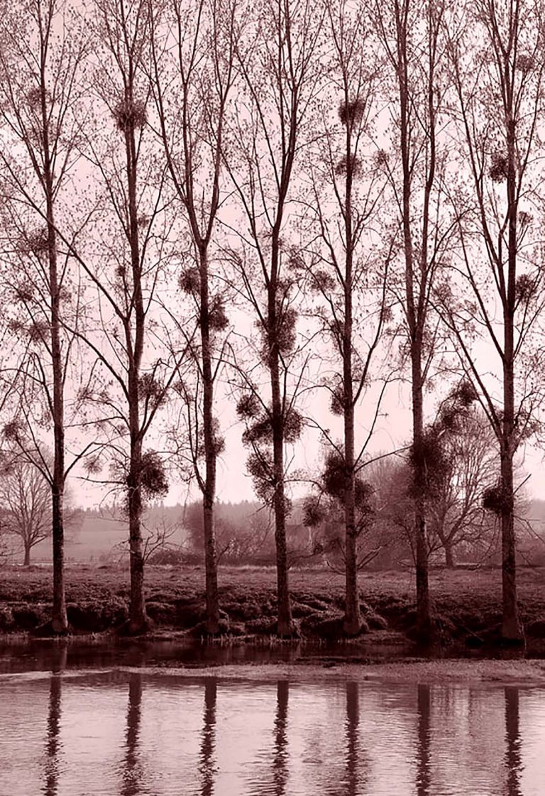 Colin Bryce, 'Trees', photograph
