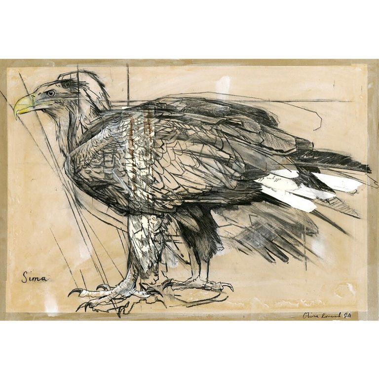 Olivia Lomenech Gill, 'Sima, White Tailed Sea Eagle', charcoal, gouache, collage