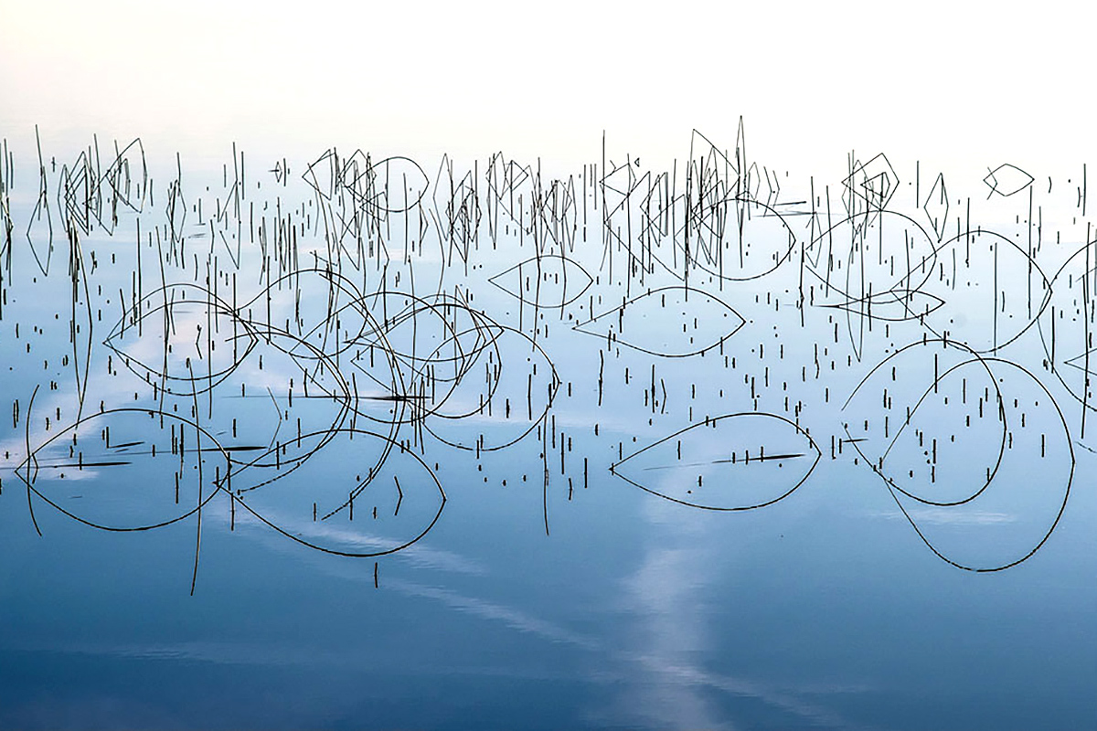 Allan Wright, 'Piscean Reeds'