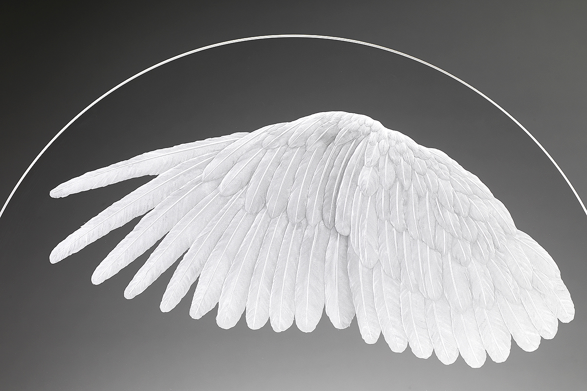Alison Kinnaird's 'Art in Glass' is at Fringe Venue 244: 'Wing', photo Shannon Tofts