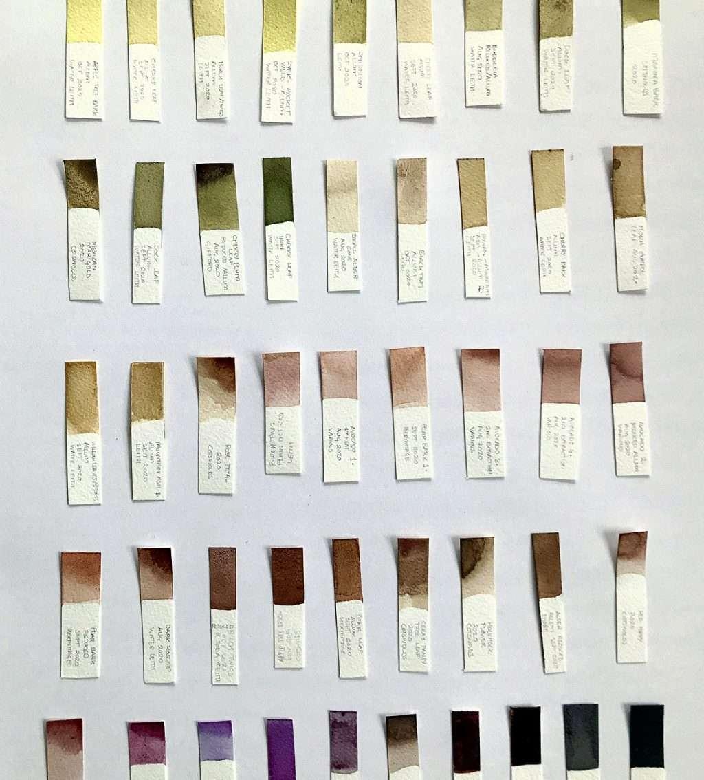 'Botanical Ink - Foraging for Colour'