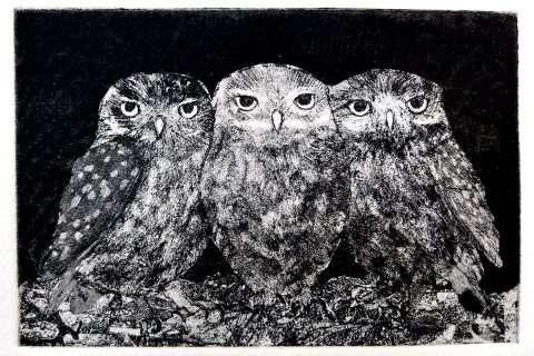 Sheila Roberts, 'Little Owls'
