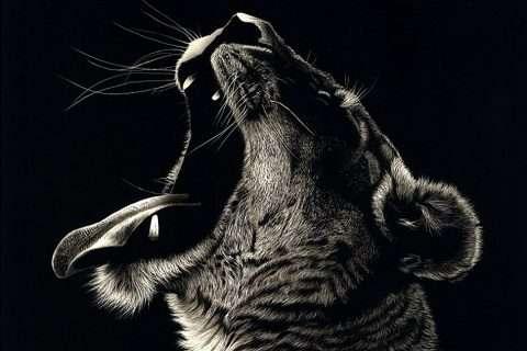 Gordon Corrins, 'Big Cat Nap'