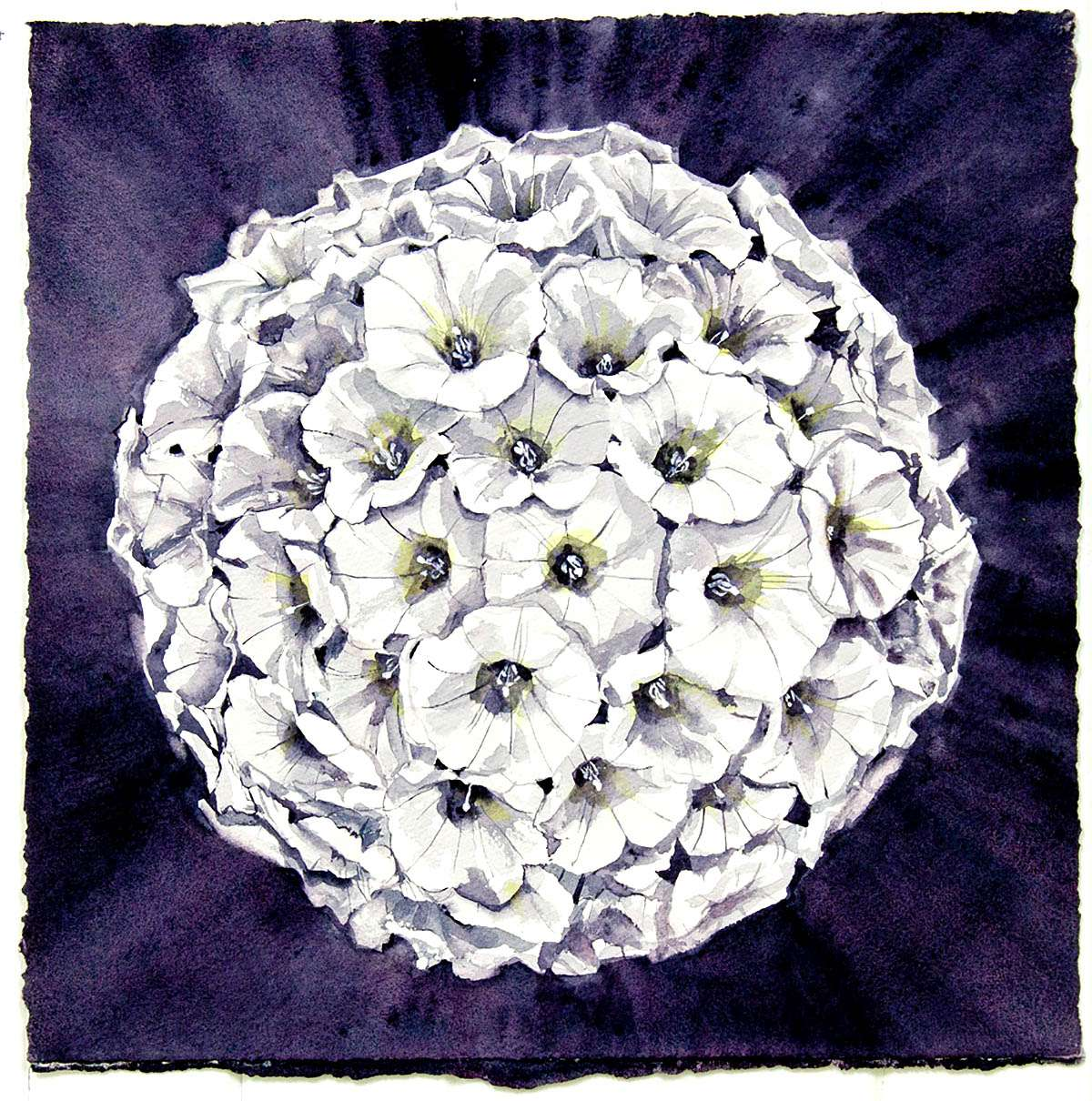 Kirsty Lorenz, 'Full Moon in Bindweed', watercolour and acrylic on paper