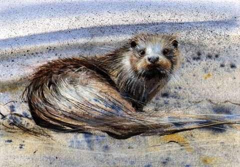 Lucy Newton, 'Otter, Loch Spelve'