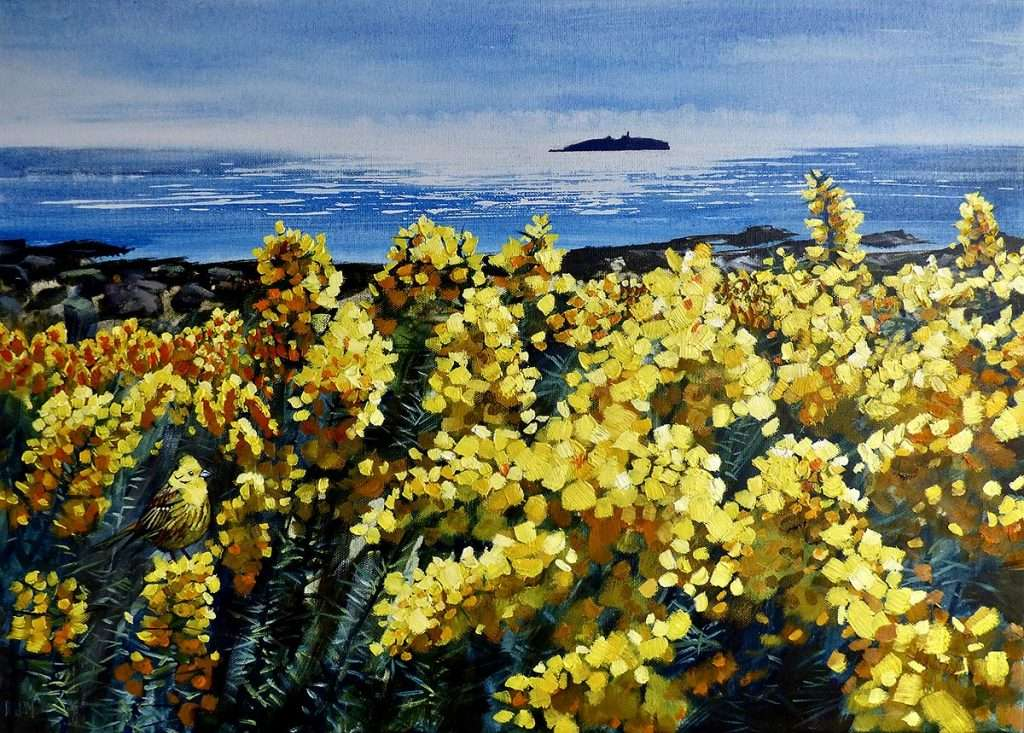Phillipa Mitchell, 'Yellow Gorse and Yellowhammer with the Isle of May'